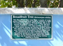 Breadfruit Tree sign in Hope Town, Elbow Cay, Abacos, The Bahamas