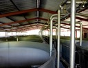 Rows of stainless stell open-top fermentation tanks at La Mauny distillery